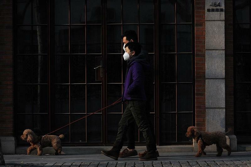 Passeando com cachorro de máscara